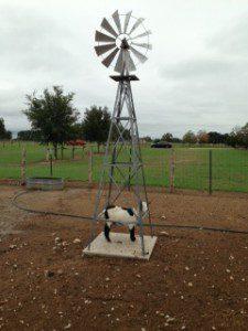 Goat in Windmill