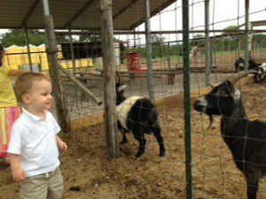 Thomas and Goat