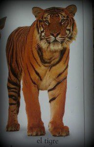 """I proudly earned my """"tiger stripes!"""""""