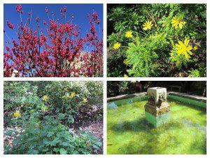 Spring on the grounds of the Alamo, San Antonio, Texas