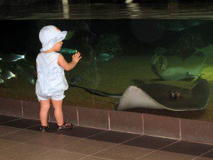 Checking out the giant sting ray at the Texas State  Aquarium