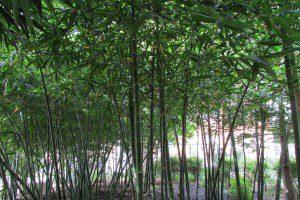 ChrisPark - bamboo |Alamo City Moms Blog