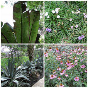 ChrisPark - banana, agave, ruellia, echinacea | Alamo City Moms Blog