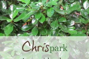 CHRISpark: A memorial garden in the heart of the city | Alamo City Moms Blog