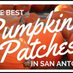 The Best Pumpkin Patches in San Antonio