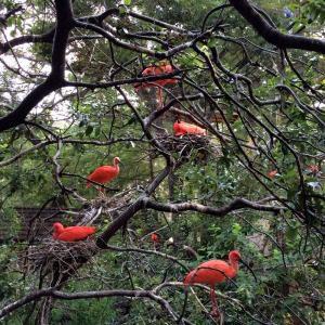 Scarlet ibis at the San Antonio Zoo | Alamo City Moms Blog