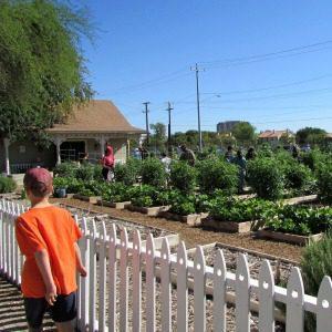 Children's Vegetable Garden at the San Antonio Botanical Garden | Alamo City Moms Blog