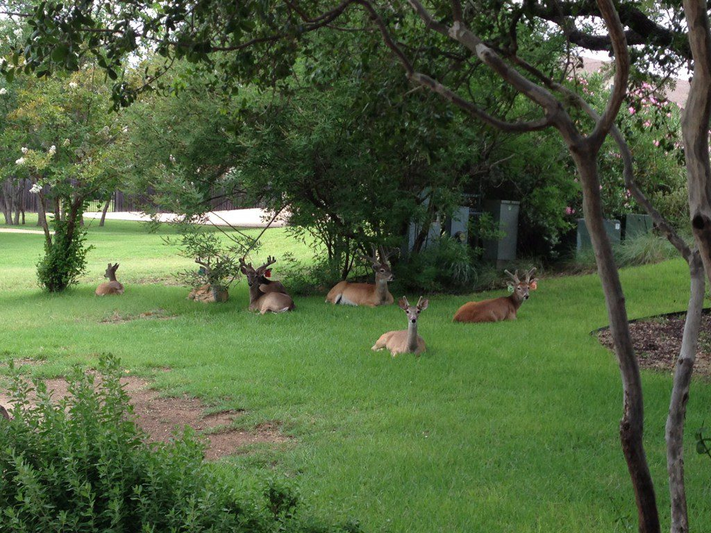This is what a stag party looks like in Fair Oaks Ranch.