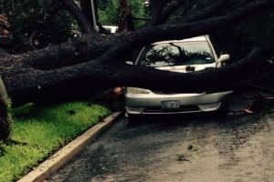 tree cruch car