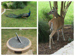 Deer, peacock, and sundial at the Quadrangle at JBSA-Fort Sam Houston | Alamo City Moms Blog