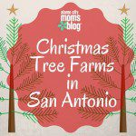 Christmas Tree Farms in San Antonio: Where to Chop Your Own Tree