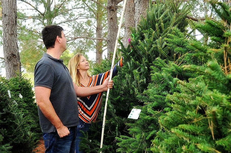 Evergreen Farms. Evergreen Farms Christmas Trees - Christmas Tree Farms: Pick Your Own Tree!