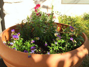 Plant a pot of flowers | Alamo City Moms Blog