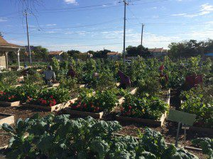Almost free brain booster: plant a garden (this one is at the San Antonio Botanical Garden) | Alamo City Moms Blog