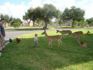 Visiting the deer at Ft. Sam