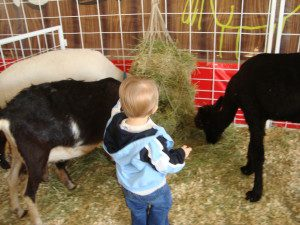 Checking out the petting zoo.