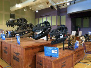 Dinosaur George fossil collection at Morgan's Wonderland event center | Alamo City Moms Blog