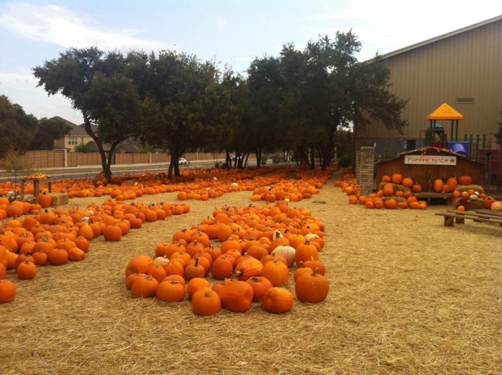 pumpkin patch san antonio