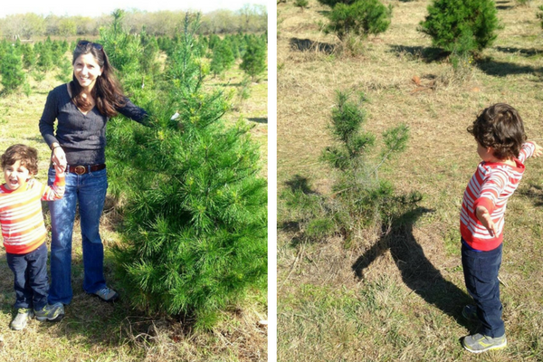 Choose And Cut Your Own: Christmas Tree Farms In San