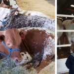 Saddle Up for Fun: The Scoop on the San Antonio Stock Show and Rodeo
