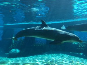 Dolphin Lagoon in Discovery Point at SeaWorld San Antonio | Alamo City Moms Blog