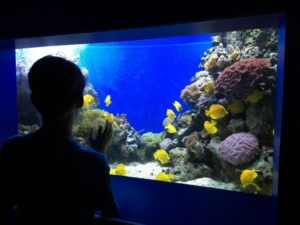 Explorer's Reef in Discovery Point at SeaWorld San Antonio | Alamo City Moms Blog