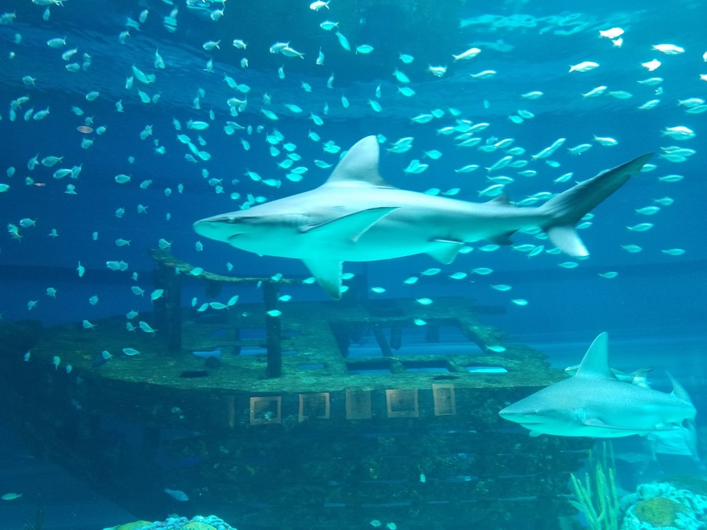 See You by the Sea: A Guide to the Texas State Aquarium