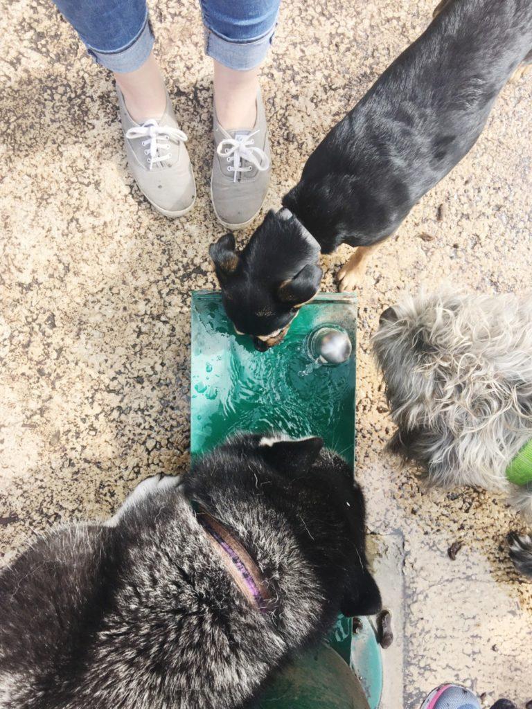 dog-friendly-places-in-san-antonio-mcallister-park