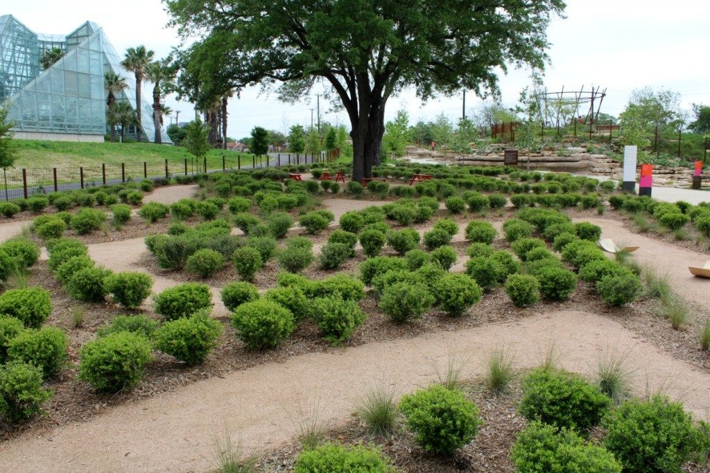 Muhly Maze at the Family Adventure Garden at the San Antonio Botanical Garden | Alamo City Moms Blog