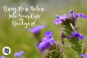 Bring More Nature Into Your Own Backyard