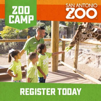 Summer Camp 2020 - SA Zoo