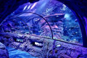 an image of an aquarium
